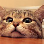 <猫っ毛>の原因!どうして猫のようにボリュームが少ない<猫っ毛>になるの?
