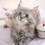 薄毛じゃないの、ネコッ毛なの。知ってほしい猫毛のこと。。。